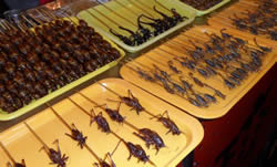 DongHuaMen Night Market Insects