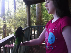 My daughter Emily feeding the parrots at Karri Valley, in Pemberton (down south)