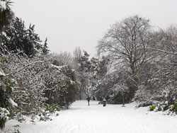 Snow in Victoria Park Finchley