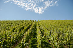 Wine lovers will enjoy the nearby Mosel region. Drive a little further for the Alsace, Champagne or Burgundy regions.