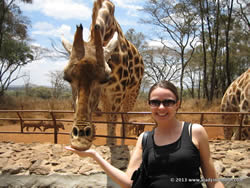 Feeding a giraffe in Kenya