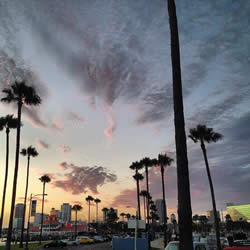 Palm trees and magnificent sky - Los Angeles staples
