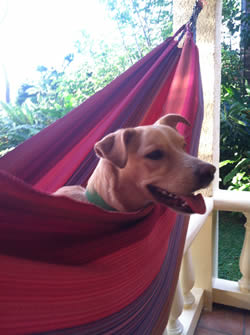 My adopted island doggie, Lina, just hangin out in the hammock. She used to live at a gas station on the island, so a friend suggested we name her Lina for gasolina. She smiles a lot. And while we were gone for 6 weeks our friend taught her to fist bump. It's pretty fantastic.