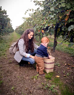 Grape picking with my toddler in the Modena countryside