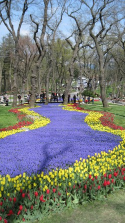 Emirgan Park during the Tulip festival