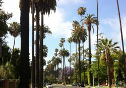 Unmistakably Beverly Hills: palm-tree lined streets