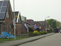 Dutch and Frisian flags are flying in honor of King's Day.