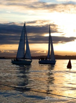 Yacht racing on the Hauraki Gulf, North Island, New Zealand